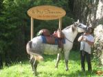 acceui-cheval (Copier)