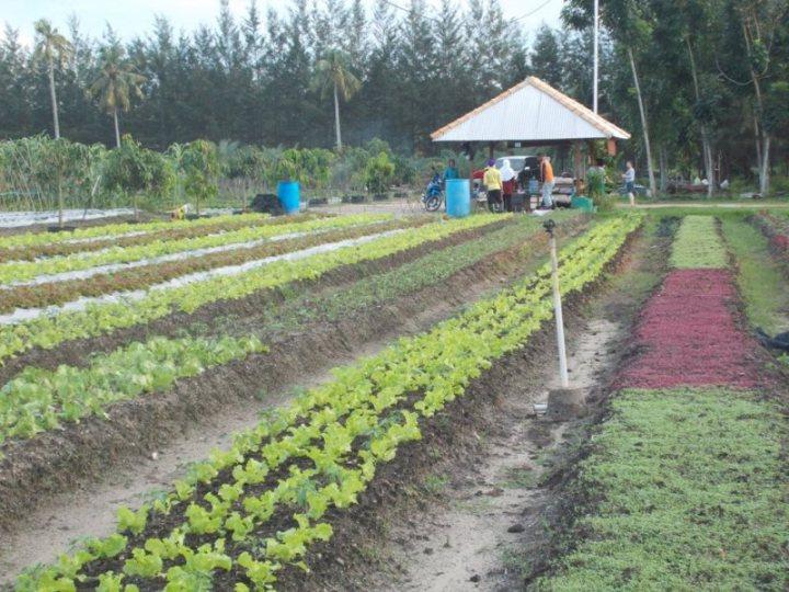 bangka-botanical-garden-1