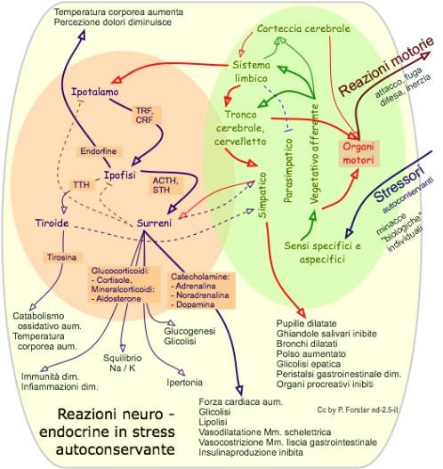 "reazioni neuroendocrine allo stress (P.Pancheri: ""stress, emozioni e malattia"")"