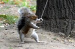 ninjasquirrel