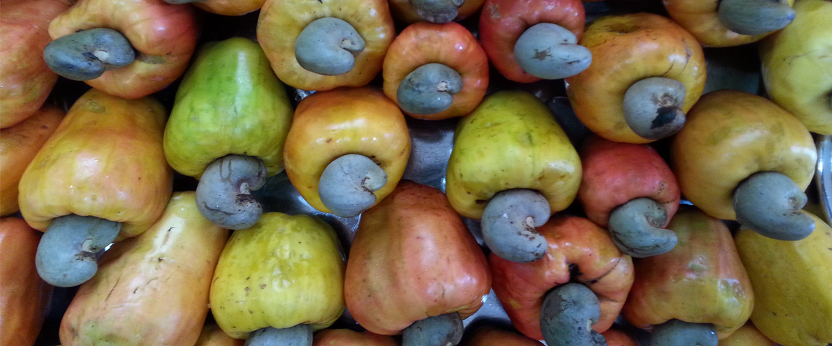 Raw Cashewnuts importer exporter in india