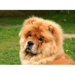 Small Crop Of Weird Dog Breeds