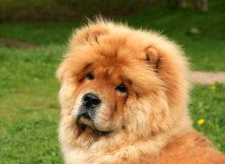 Small Of Weird Dog Breeds