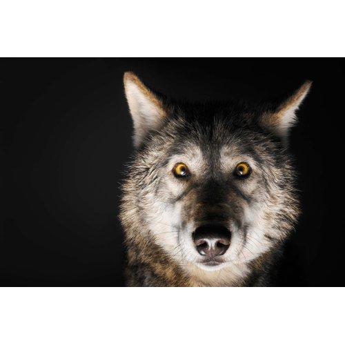 Medium Crop Of Female Wolf Names