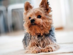 Small Of Best Dogs For First Time Owners