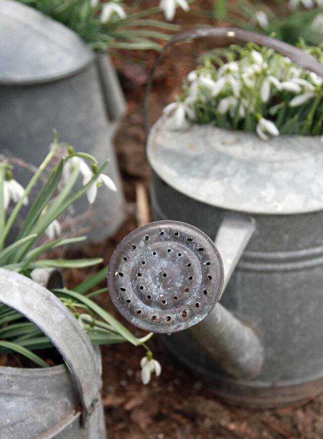 wateringcan9422