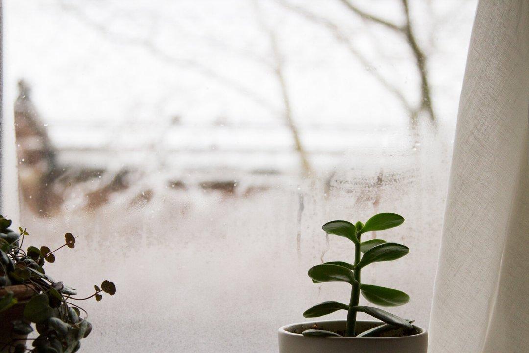 snowy_window_reading_my_tea_leaves_IMG_4627
