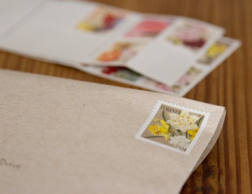 daffodil_stamp_reading_my_tea_leaves_IMG_7149