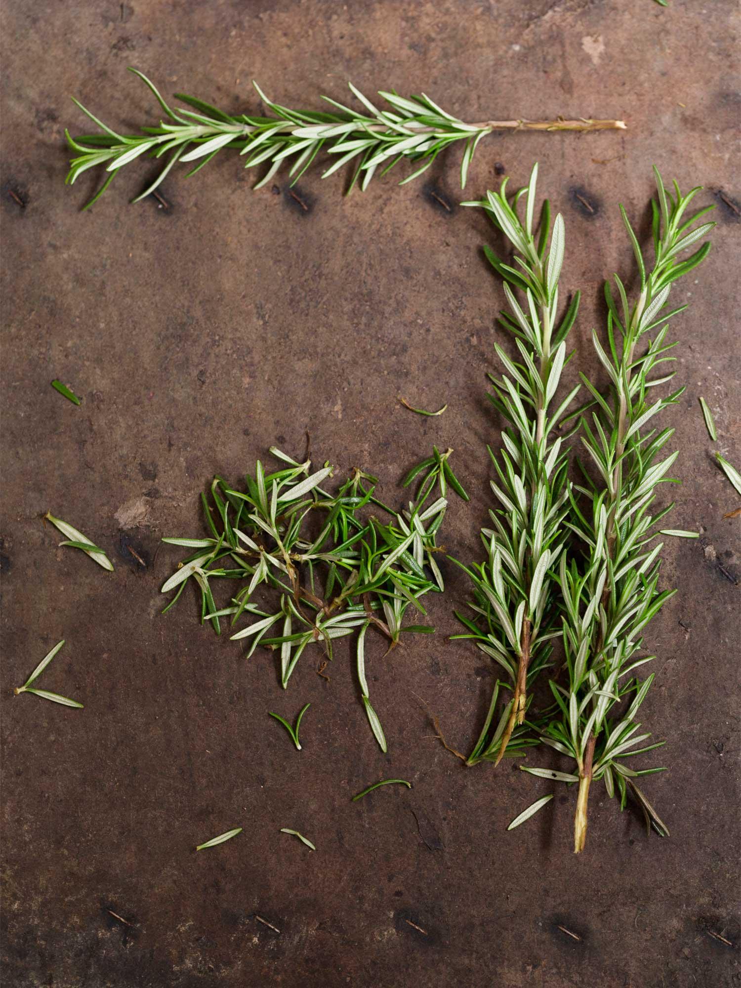 Fullsize Of How To Harvest Rosemary