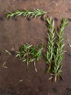 Small Of How To Harvest Rosemary