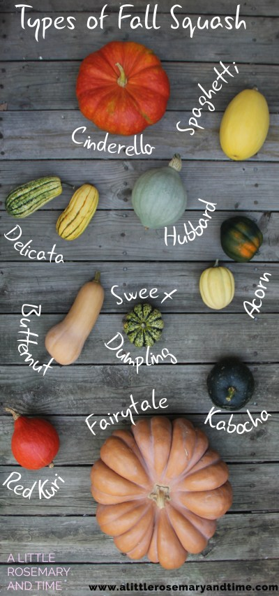 Types of Fall Squash - A Little Rosemary & Thyme