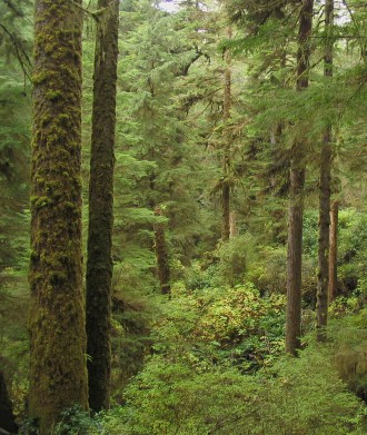 Native forest, Vancouver Island