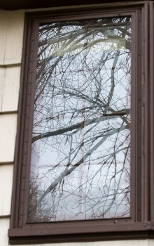 tree reflection in window