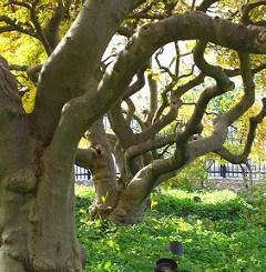magnolia bark extract Phipps Conservatory