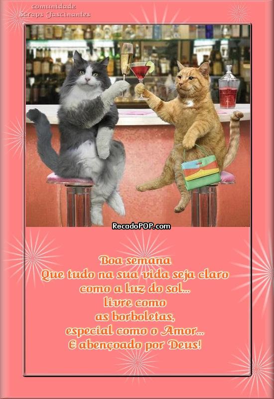 Recado Facebook Boa Semana Gatos Brindando