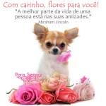 Recado Facebook Flores com carinho…