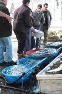 Marché au poisson ©