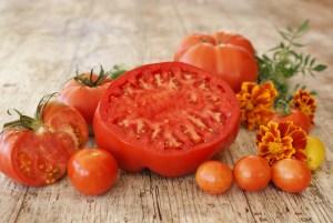 Tomates du jardin bio avec graines sélectionnées