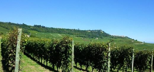 Barolo en Piamonte