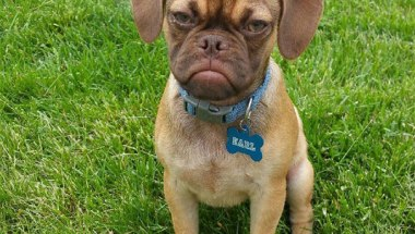 GRUMPY Dog EARL Breaking The Internet Goes Viral On Reddit (7)