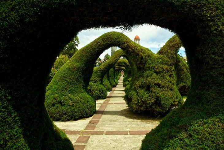 Tunel wykonany z drzew w parku Fansisco Alvarado w Kostaryce