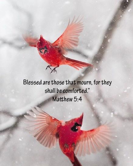 Cardinal Matthew 5 4