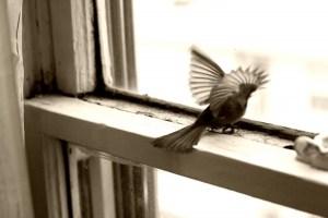 trapped-bird-sepia-1024x682
