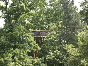 kew small Kew Gardens Treetop Walkway   playing like a monkey is fun...