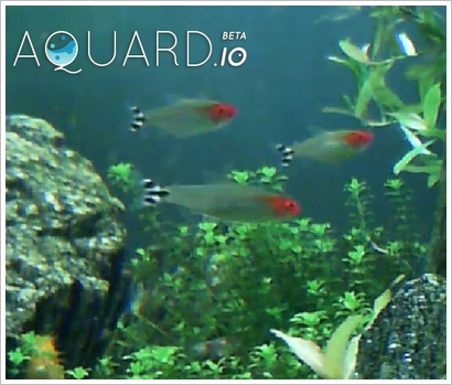 aquardio4 Aquardio   Bored? Then feed some real fish with your browser and mouse button