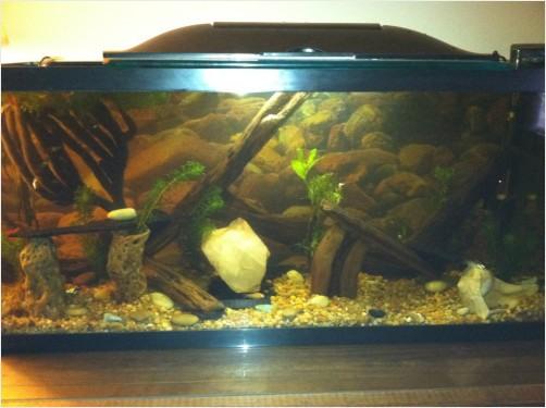 Fish Tank  Fish Tank