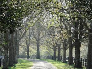 wonderful walking and riding trails in Milton GA