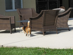 is-too-hot-out-here-going-to-sit-in-the-shade-rocky