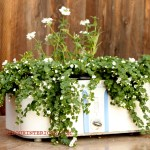 Crock Pot Planter 3
