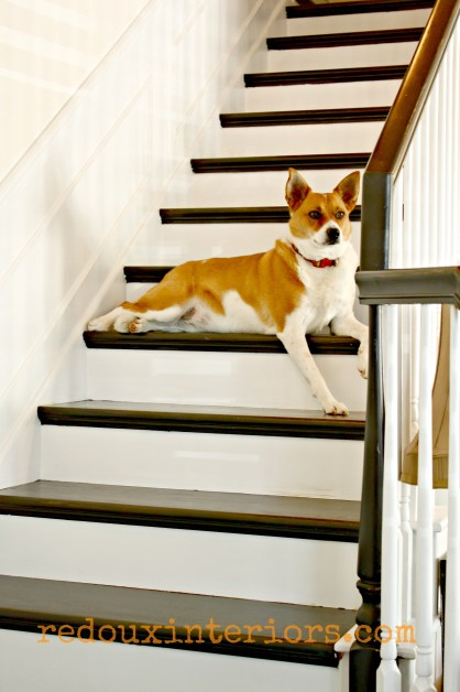 Black and white stairs with dog lounging redouxinteriors