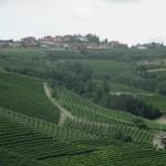 Vineyards of Barbaresco