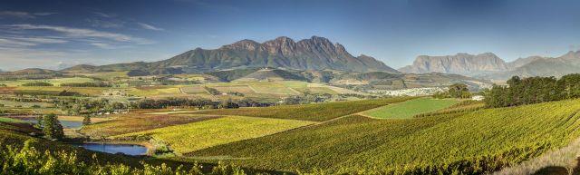 Vineyards with Simonsberg (4)