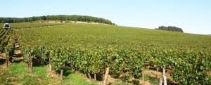 Vineyards of Domaine Vrignaud