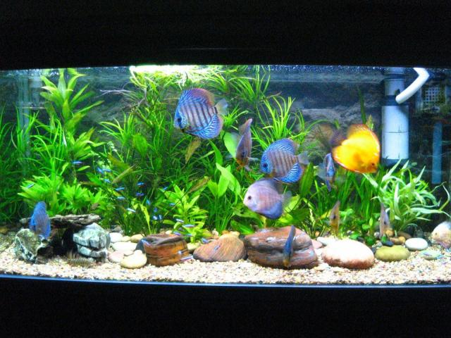 Fish Diseases Your Fish Might Get,freshwater aquariums,aquariums