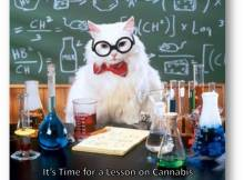 420 to the Blackboard
