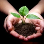 Q&A: Healing plants, animals, objects