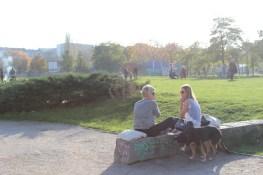 Hunde und Mauerpark