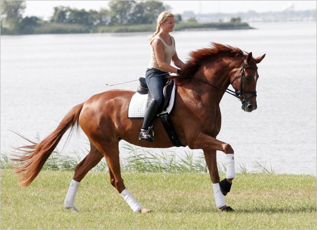 horse-riding_storysize_650_020714015451