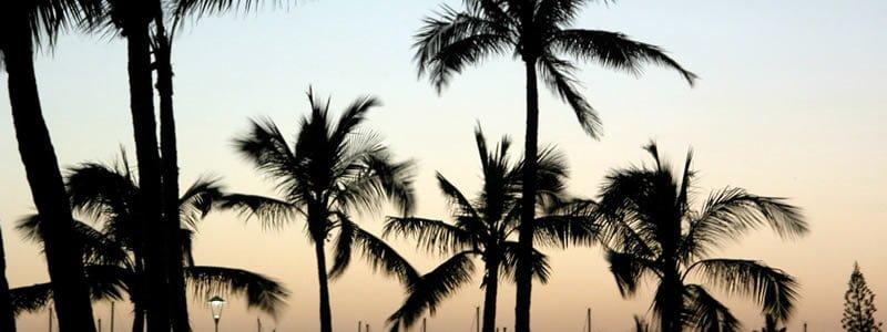 Cennetin Başkenti: Hawaii