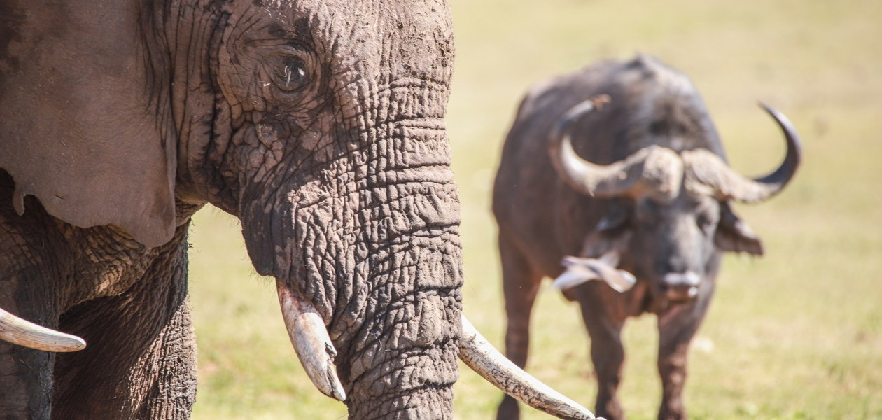 Addo NP-3657