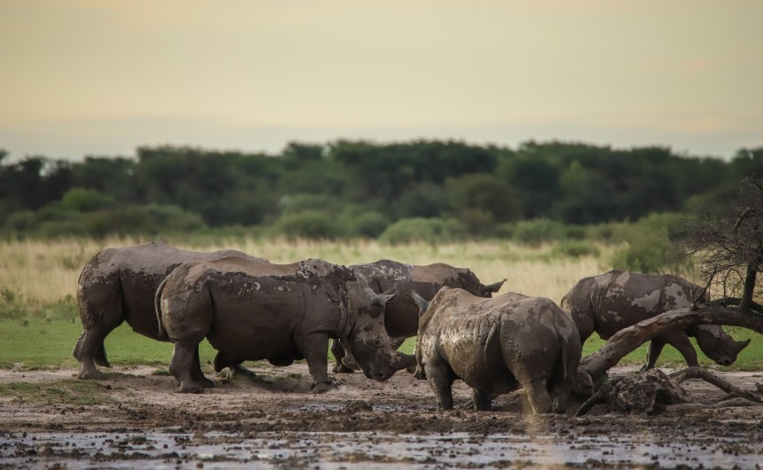 06 - Karma Rhino Sanctuary-1876