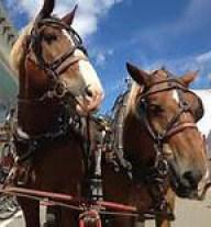 horses up close