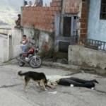 El cuerpo de Luis Eduardo Maldonado estuvo en la calle hasta pasado el mediodía, cuando finalmente llegó la furgoneta del Cicpc