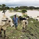 Los productores aún padecen el mal estado de las vías por las inundaciones que se registraron en la cuenca del Lago de Maracaibo.