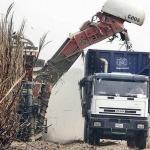 El plan de rescate de la caña de azúcar ahorrará 300 millones de dólares por sustitución de importaciones, según Fesoca.
