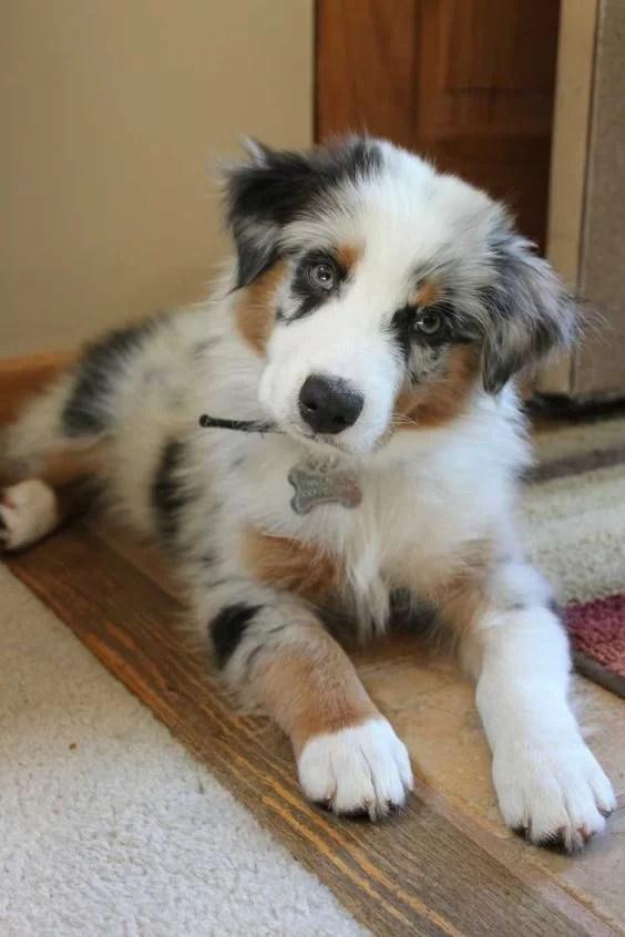 Friday Favorites puppy